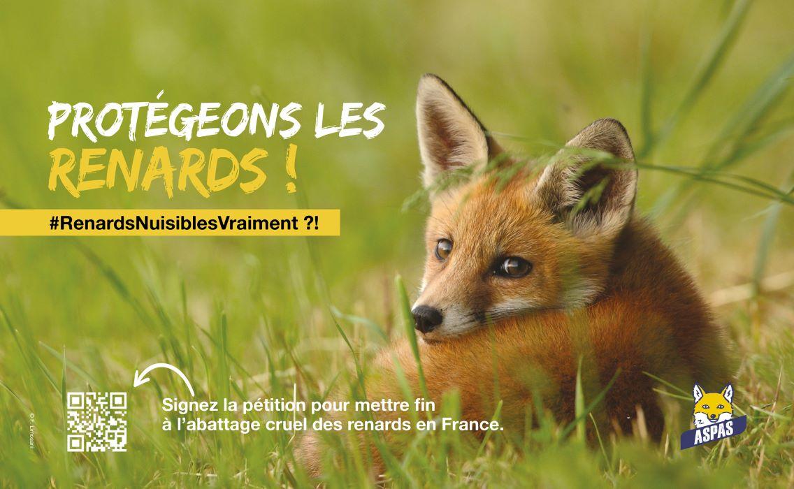 Lush se mobilise avec l'association ASPAS pour protéger les renards