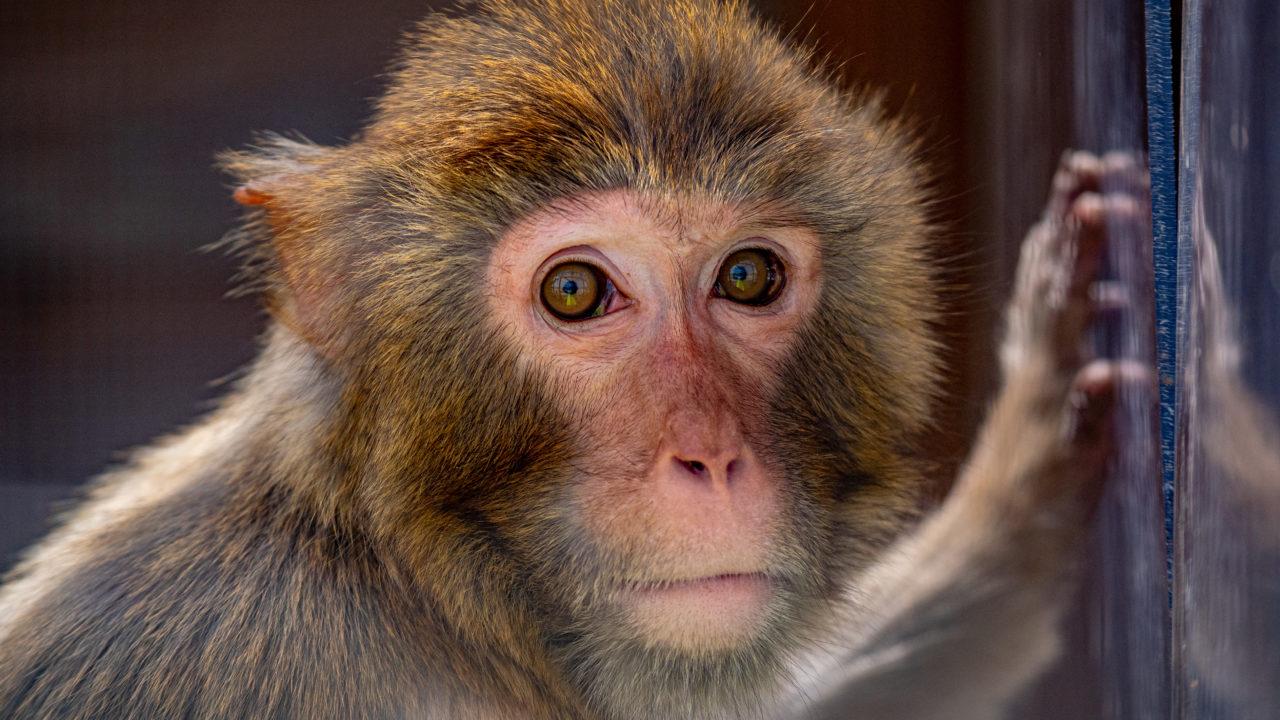 https://savoir-animal.fr/wp-content/uploads/Cannelle-la-primate-1280x720.jpg