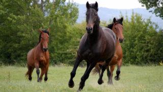 Les Crins de Liberté, une deuxième chance pour les chevaux maltraités