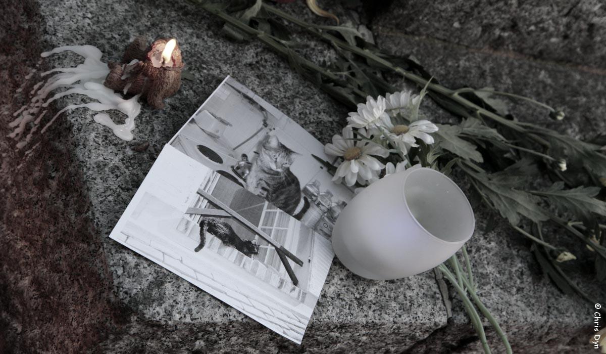 Le cimetière des animaux d'Asnières