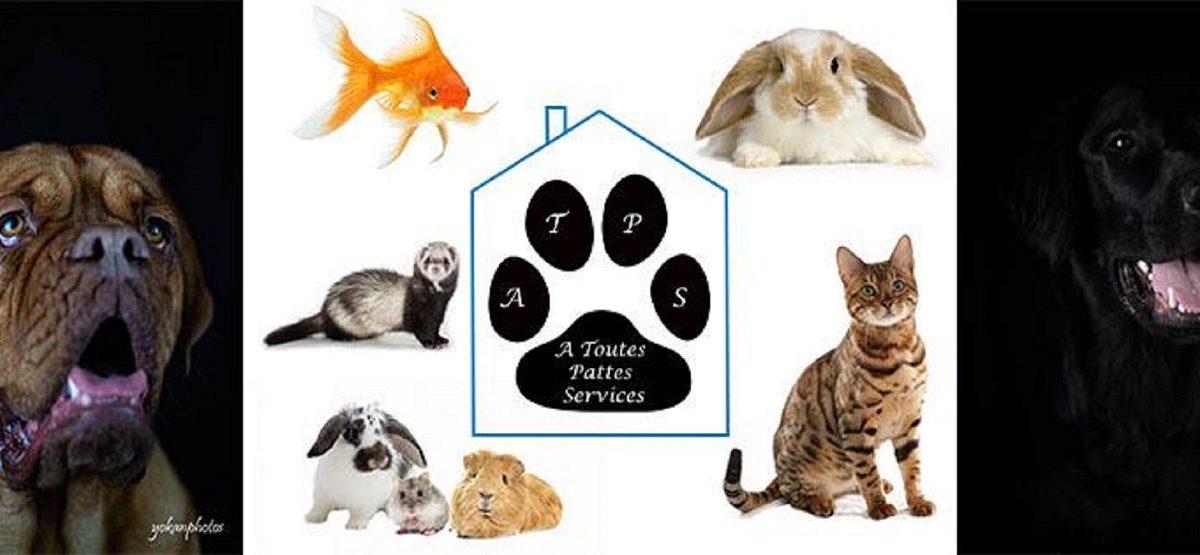 À Toutes Pattes Services, service pour animaux domestiques à la carte