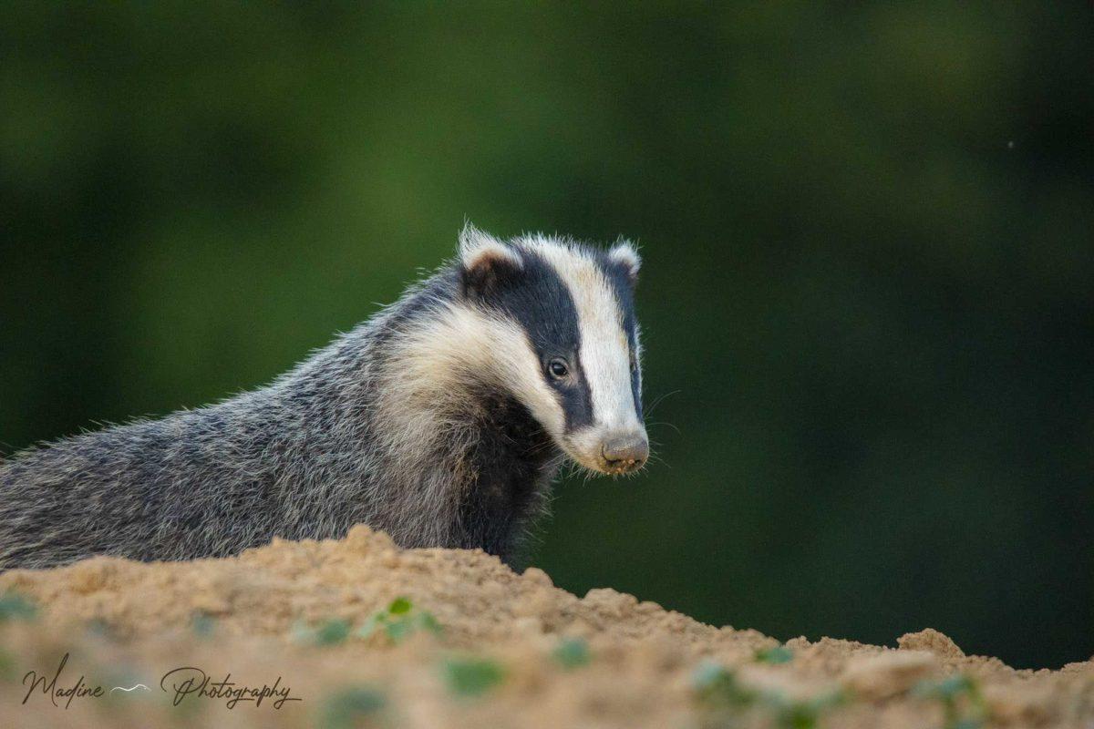 Je me sens bien plus proche de la nature depuis que je fais de la photographie animalière