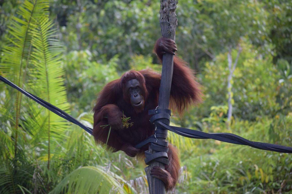 « The Wild Folks » : des lunettes pour voir le monde autrement
