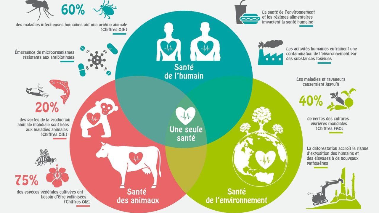 https://savoir-animal.fr/wp-content/uploads/Illustration-One-Health_web-1280x720.jpg