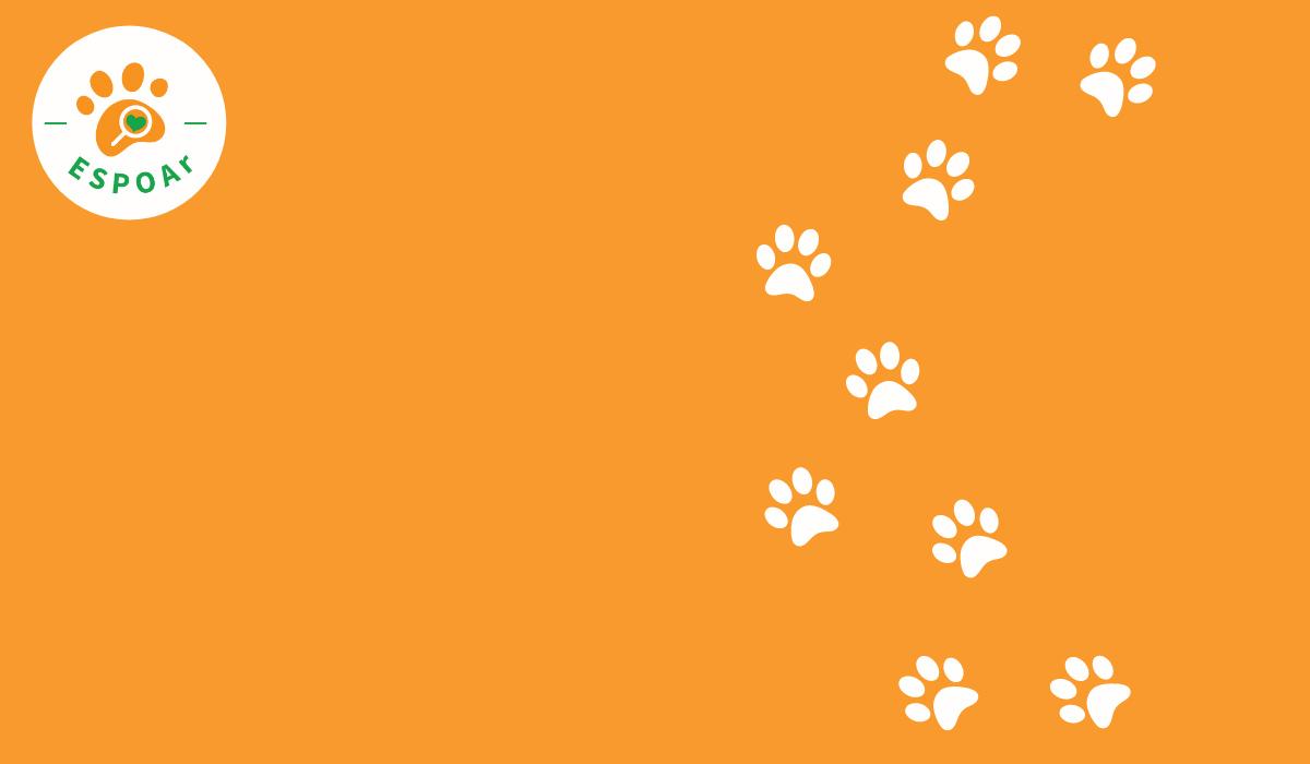Enquête : Plus des 3/4 des refuges seraient dans l'incapacité de recueillir les animaux des associations sans refuge