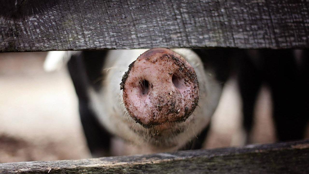 https://savoir-animal.fr/wp-content/uploads/animal-1867180_1280-1280x720.jpg