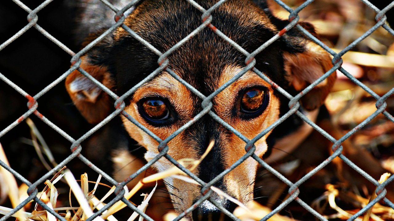 https://savoir-animal.fr/wp-content/uploads/animal-welfare-1116215_1280-1280x720.jpg