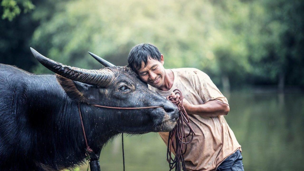 https://savoir-animal.fr/wp-content/uploads/animals-1782431_1920-e1610441276998-1280x720.jpg