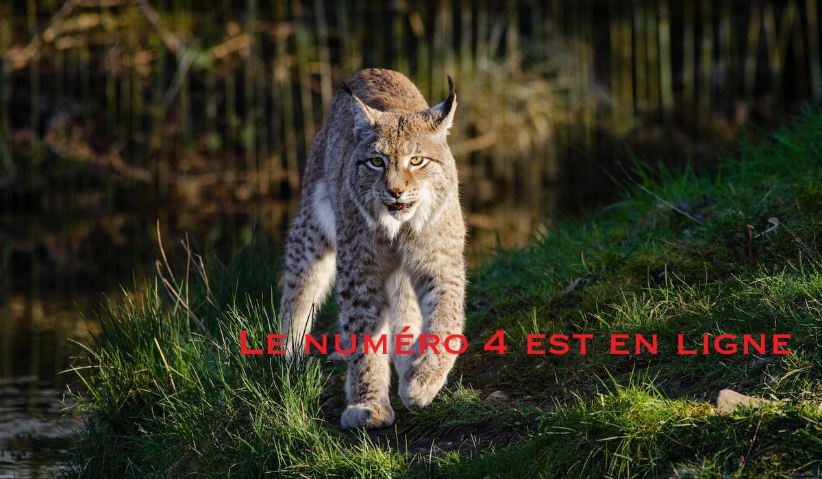 https://savoir-animal.fr/wp-content/uploads/annonce-numéro-4.jpg