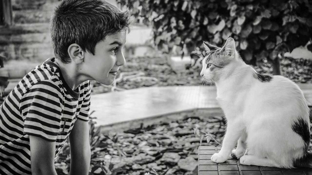 https://savoir-animal.fr/wp-content/uploads/boy-2886169_1280-1280x720.jpg