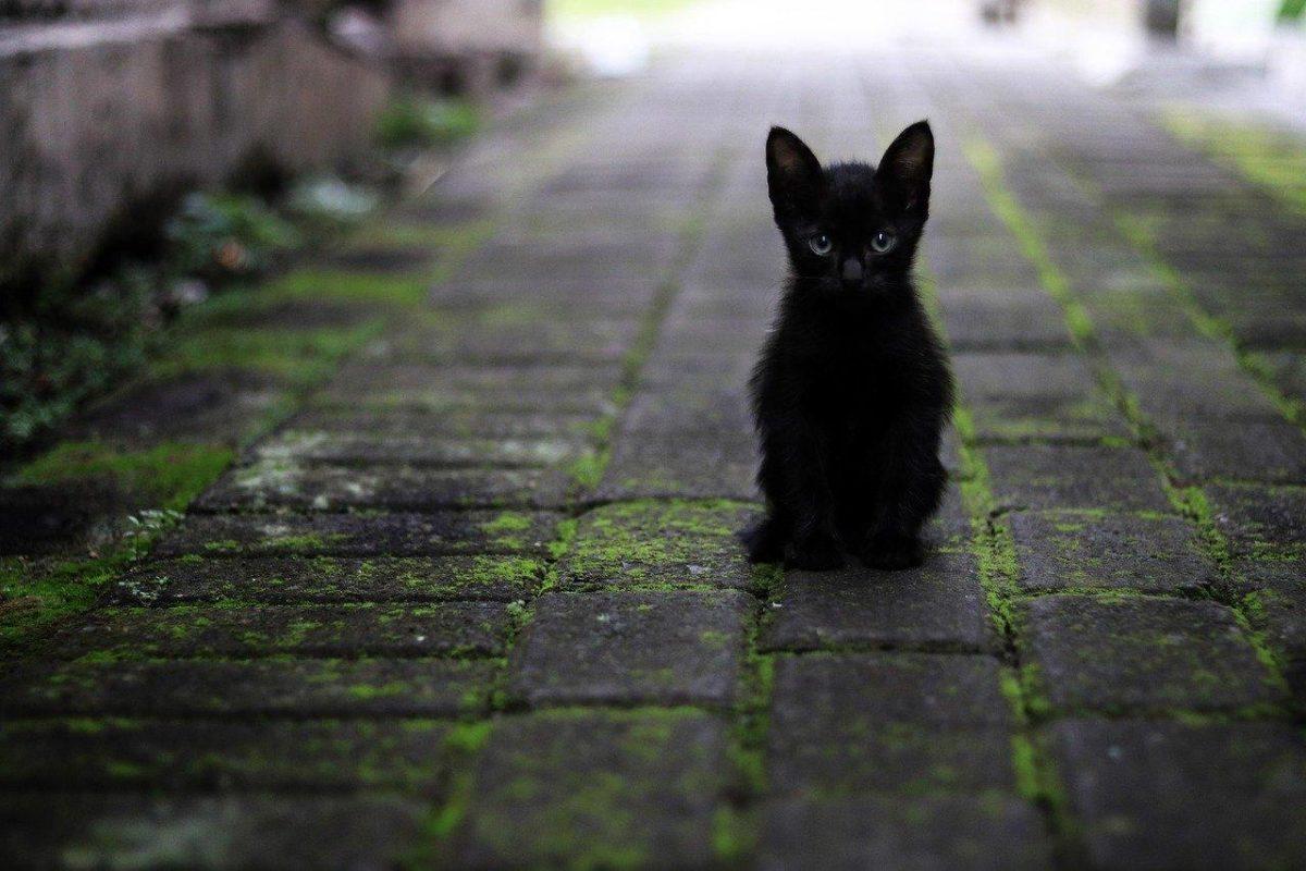 Manejo ético de gatos callejeros en España