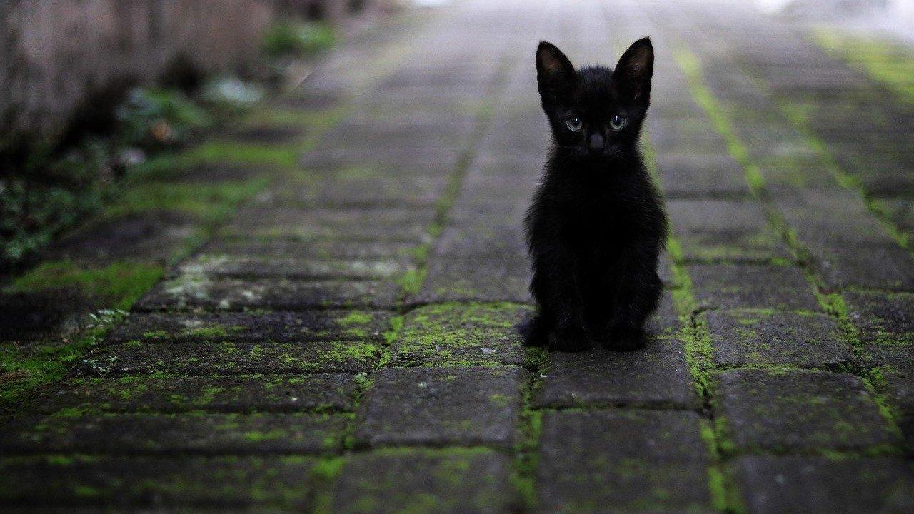 https://savoir-animal.fr/wp-content/uploads/cat-3169476_1280-1280x720.jpg