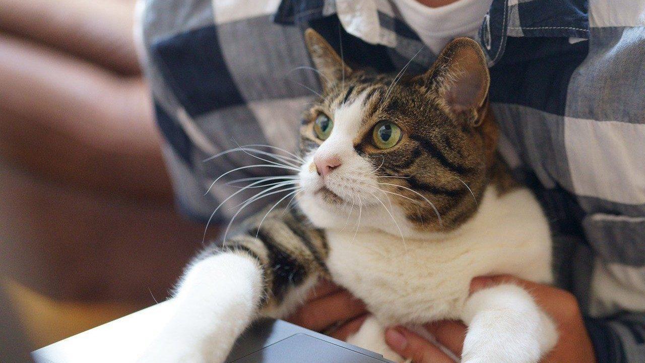 https://savoir-animal.fr/wp-content/uploads/cat-5331883_1280-1280x720.jpg