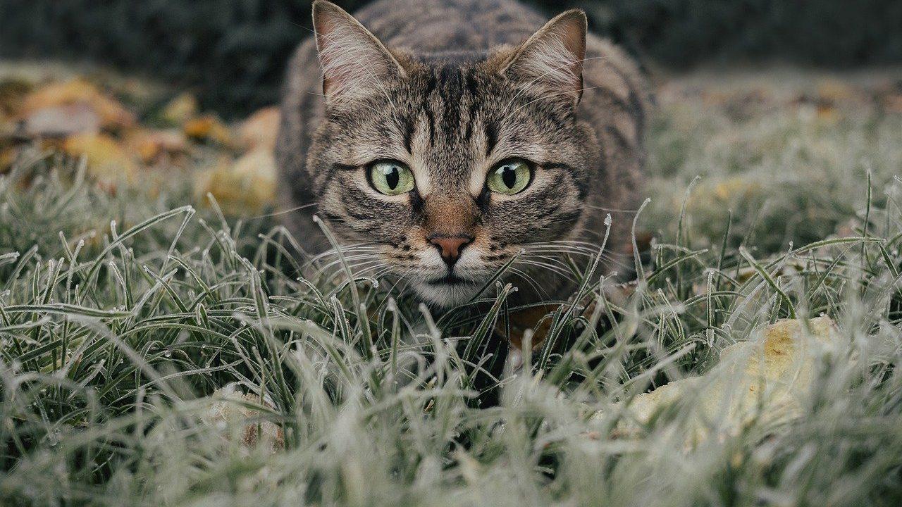https://savoir-animal.fr/wp-content/uploads/cat-5778777_1280-1280x720.jpg
