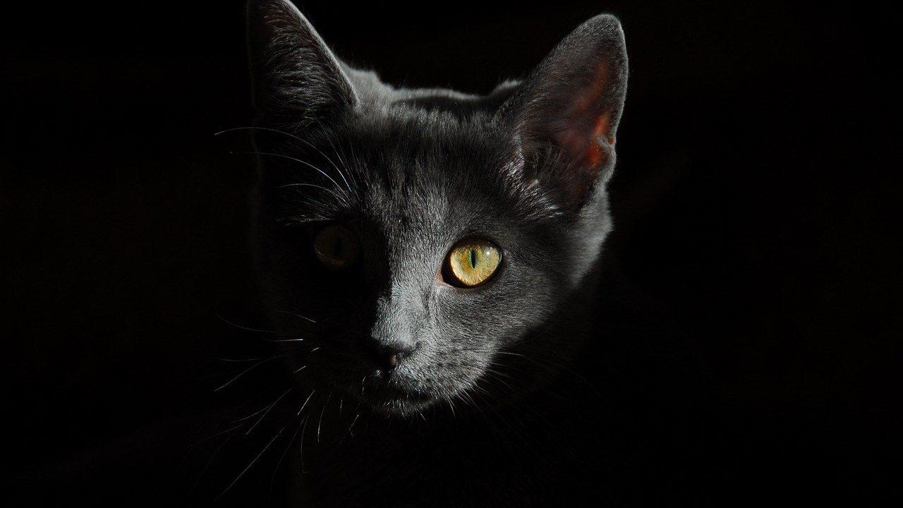https://savoir-animal.fr/wp-content/uploads/cat-778315_1280-1280x720.jpg
