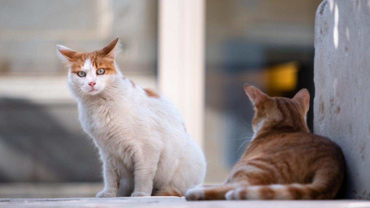 https://savoir-animal.fr/wp-content/uploads/cats-5606202_1920-1280x720.jpg