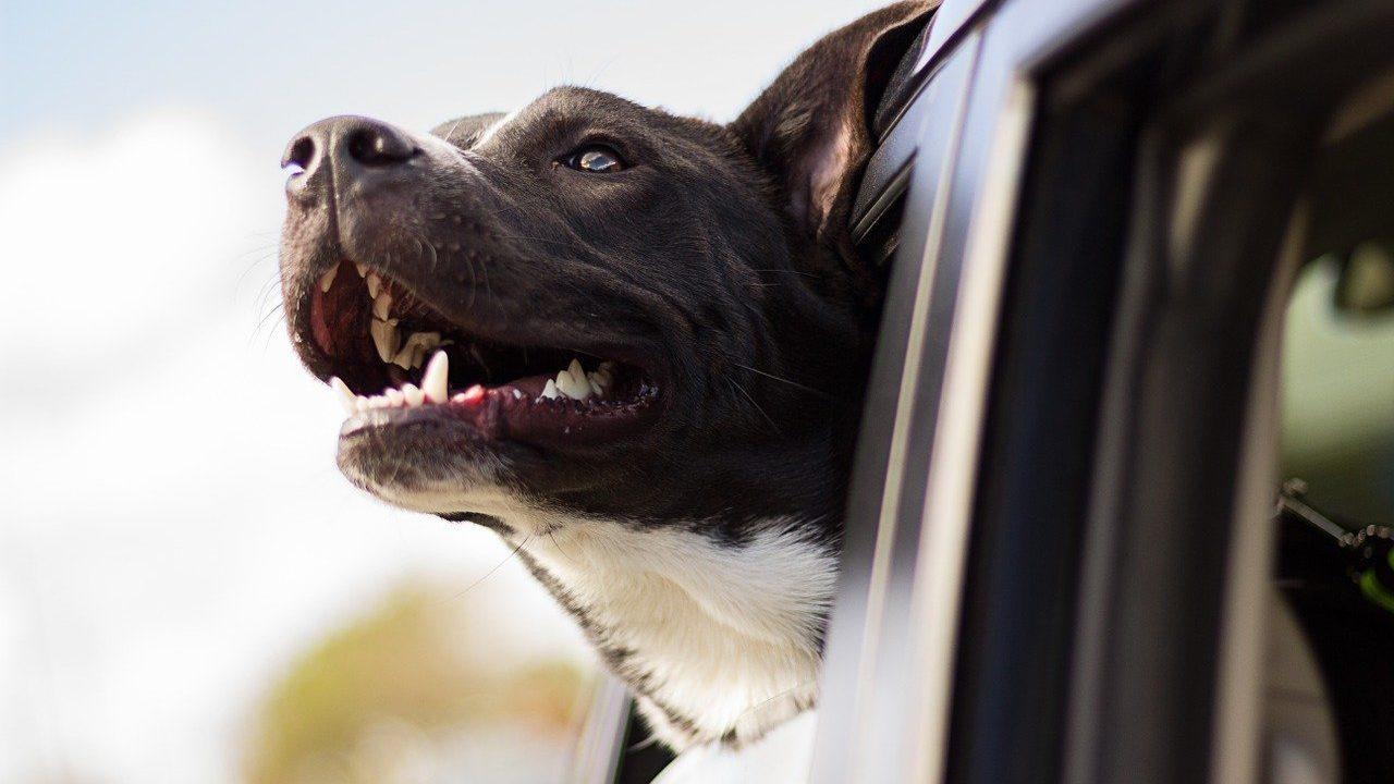 https://savoir-animal.fr/wp-content/uploads/dog-1149964_1280-1280x720.jpg