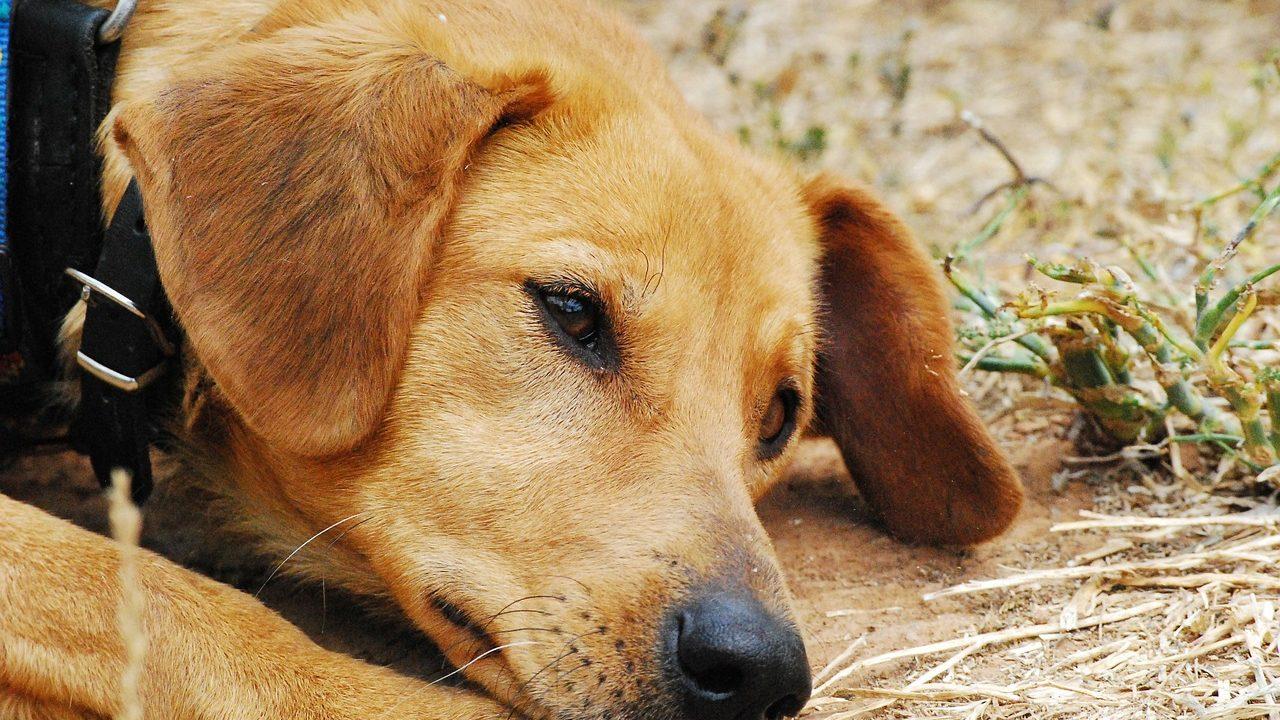 https://savoir-animal.fr/wp-content/uploads/dog-142667_1280-1280x720.jpg