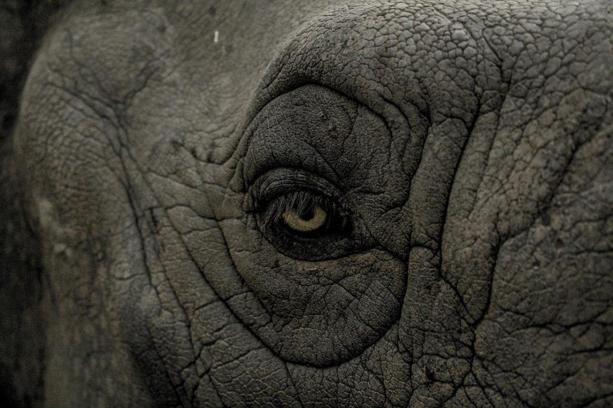 La répression du tourisme déviant à l'encontre des animaux