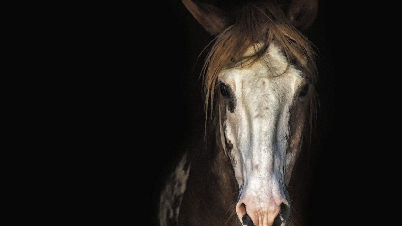 https://savoir-animal.fr/wp-content/uploads/horse-3198112_1920-e1610440873858-1280x720.jpg