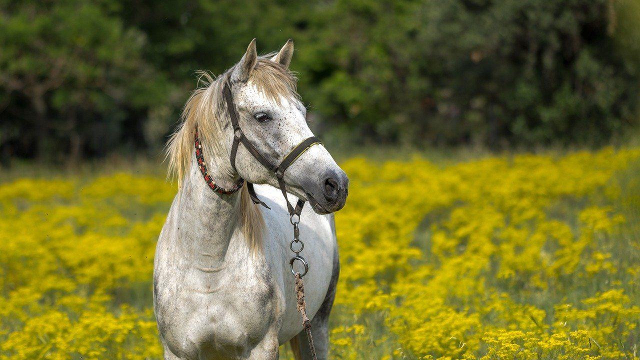 https://savoir-animal.fr/wp-content/uploads/horse-3419146_1280-1280x720.jpg