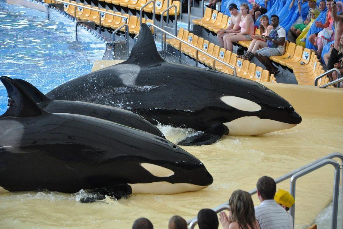 Cirques et delphinariums : les animaux sauvages ne se donneront plus en spectacle