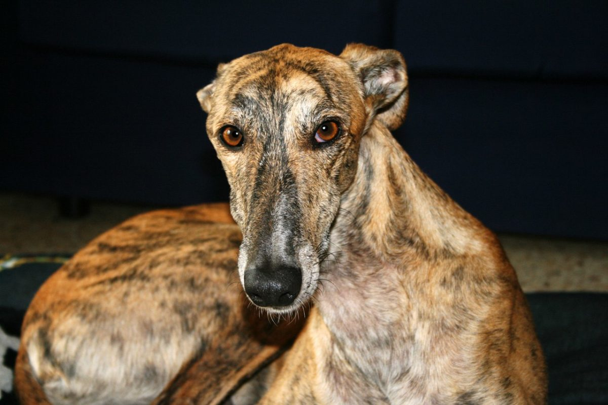 L'abandon de chiens en Espagne : un pays à deux vitesses