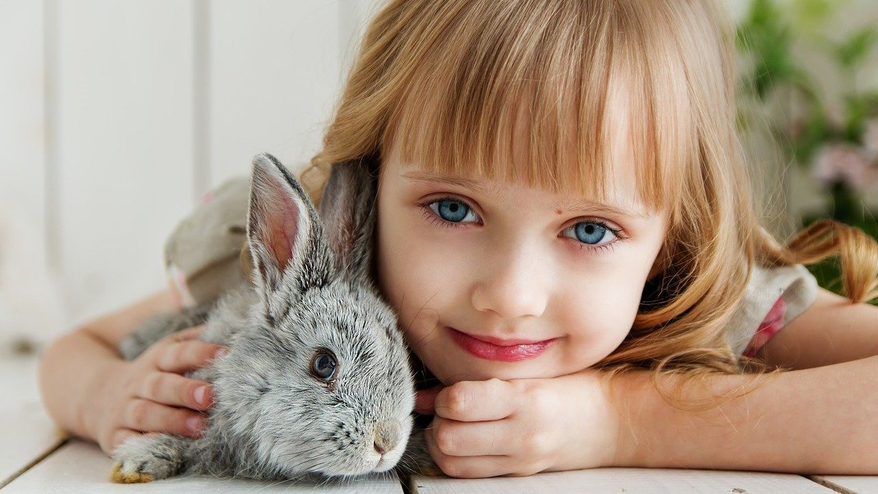 https://savoir-animal.fr/wp-content/uploads/rabbit-3660673_1280-1280x720.jpg