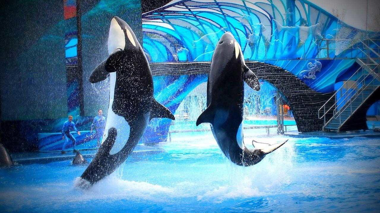 https://savoir-animal.fr/wp-content/uploads/sea-world-1428530_1280-1280x720.jpg