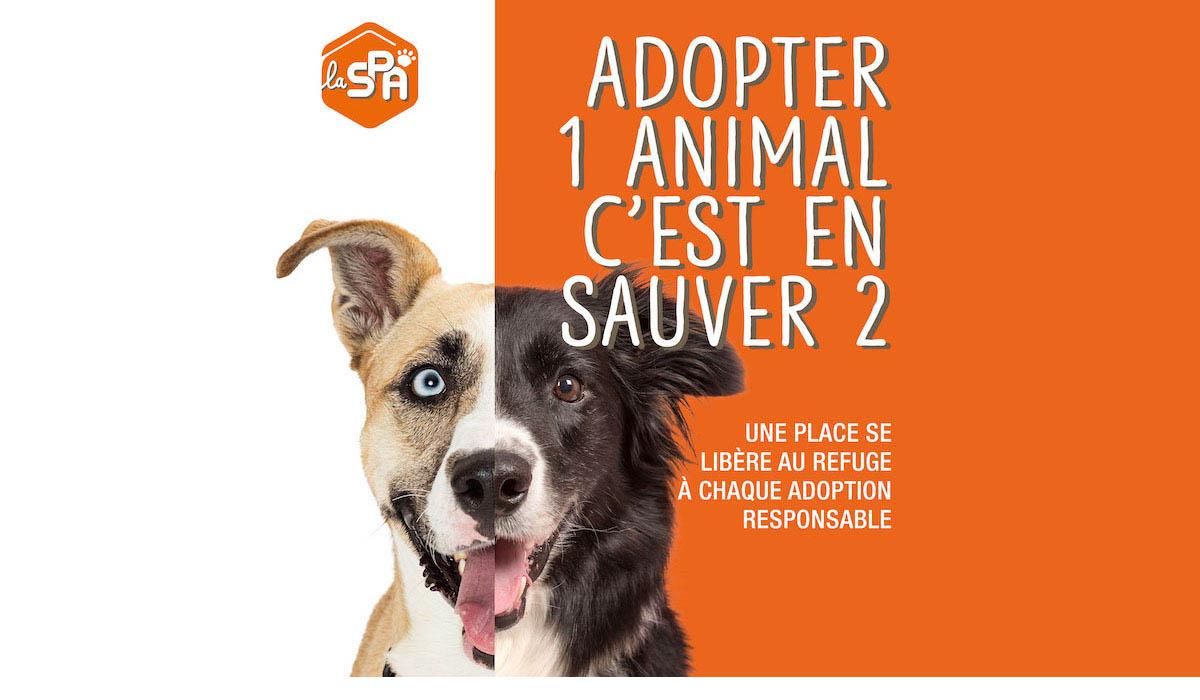 La rentrée de l'adoption se fait à la SPA ! Adopter un animal, c'est en sauver deux !