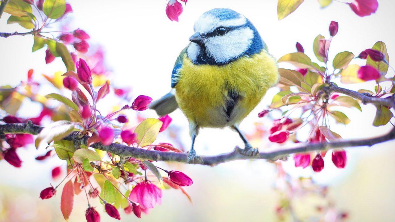https://savoir-animal.fr/wp-content/uploads/spring-bird-2295434_1920-1280x720.jpg